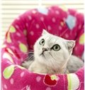 New Arrival Colorful Super Flexible Soft Style Cute Cat Bed