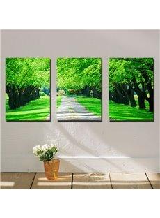 Beautiful Green Trees Along The Road Canvas Wall Art Prints
