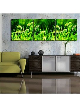 New Arrival Green Grass Toward Sunshine Canvas Wall Prints