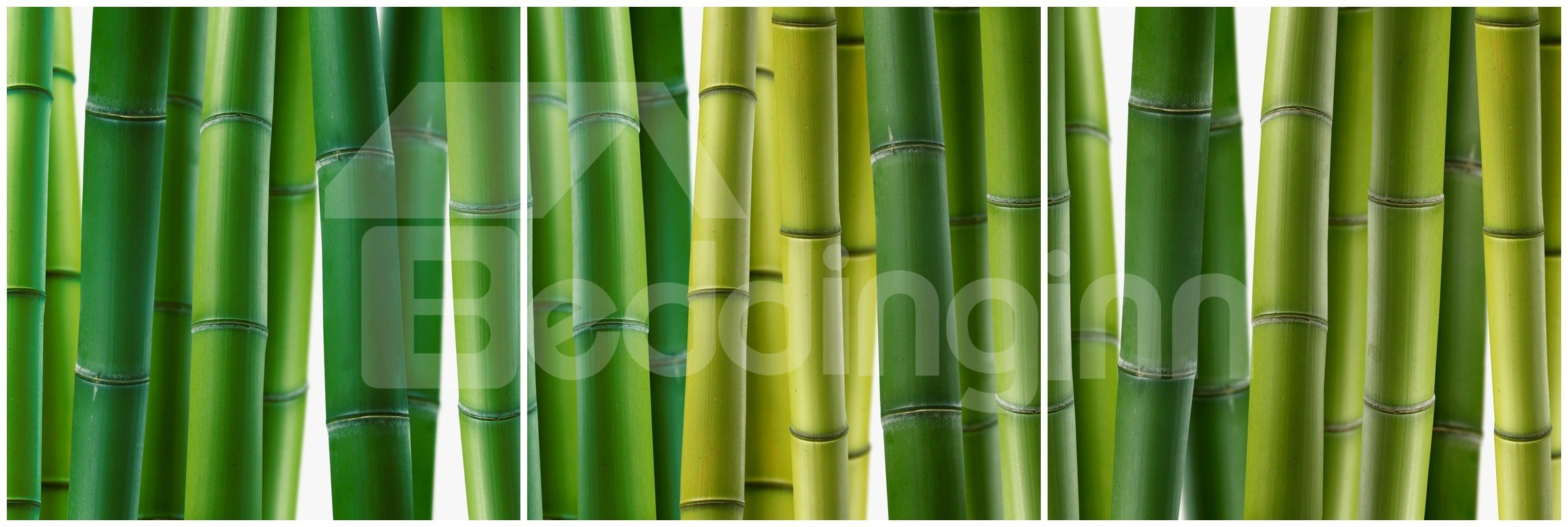 New Arrival Bamboo Grove Canvas Wall Prints