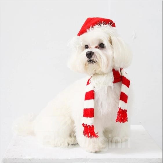 New Arrival Lovely Fashion Red Hat for Pet