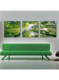 Pretty Treetop 3-Pieces of Crystal Film Art Wall Print
