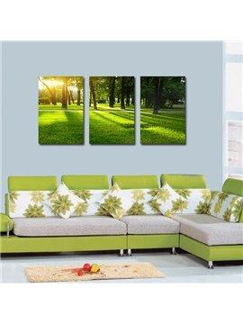 Pretty Grassland 3-Pieces of Crystal Film Art Wall Print