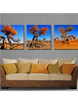 Pretty Old Trees 3-Pieces of Crystal Film Art Wall Print