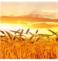 Beautiful Field Wheat 3-Piece Crystal Film Art Wall Print