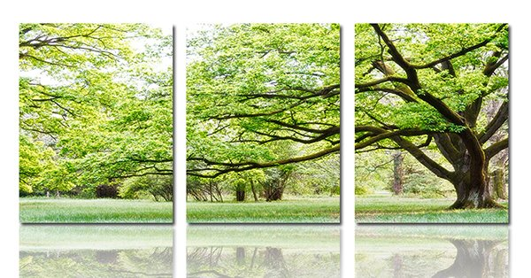 Spring Scenery Forest 3-Piece Crystal Film Art Wall Print