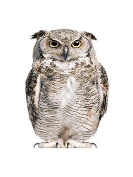 VIvid 3D Owl Image Waterproof Shower Curtain