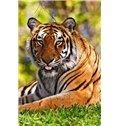 Amazing Tiger in Grassland DIY Diamond Stickers