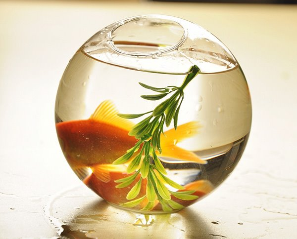 Wonderful Desktop Decoration Glass Fishbowl Flower Vase Beddinginn