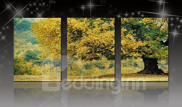 Magnificent Tree in Forest 3-Panel Canvas Wall Art Prints