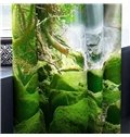 3D Torrential Waterfalls and Thick Forest Printed 2 Panels Grommet Top Curtain