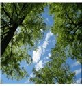 3D Green Trees Printed PVC Waterproof Sturdy Eco-friendly Self-Adhesive Ceiling Murals