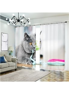 Grey Cat British Shorthair Bites Ribbon Animal Curtain