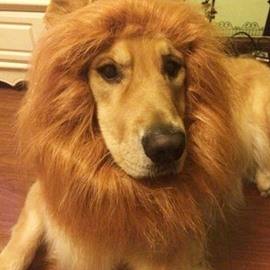 Puppy Dog Lion Wig Mane Cute Halloween Pet Costume