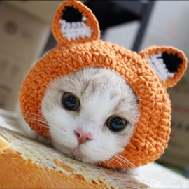Fox Shape Design Cute Orange Pet Hats for Cats