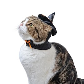 Halloween Costume Cat Teddy Dog Collar Witch Hat Black