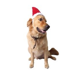 Christmas Santa Hat Adorable New Year Gift Puppy Dog Red