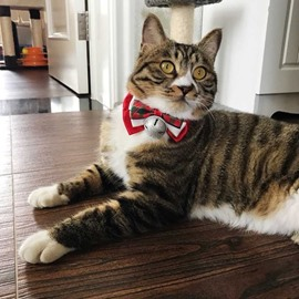 A variety of Exquisite Christmas Pet Bow Tie