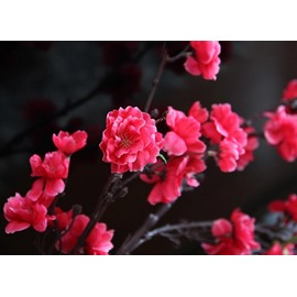 New Arrival Popular Large Simulation Single Floor Peach Blossom Flower Arrangement