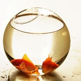 Wonderful Desktop Decoration Glass Fishbowl Flower Vase