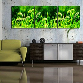 New Arrival Green Grass Toward Sunshine Canvas Wall Prints