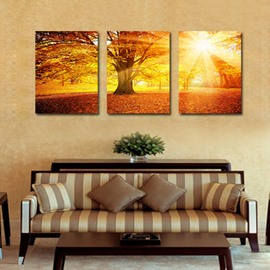Amazing Sunlight Shining Through Thick Trees 3-Panel Canvas Wall Art Prints