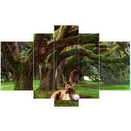 Deer Lying in Forest Hanging 5-Piece Canvas Eco-friendly and Waterproof Non-framed Prints
