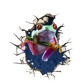 Creative Tree Frog Through Wall Removable 3D Wall Sticker