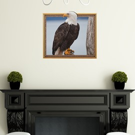 Unique White Head Black Eagle Framed Removable 3D Wall Sticker