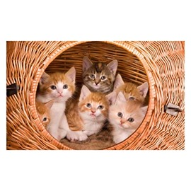 Super Cute Cats in a Bamboo Basket Pattern Non-slip Doormat