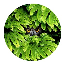Owl Eyes Gazing Hiding behind Green Leaves PVC Nonslip Round Doormat