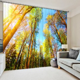 Tall Trees and Sunset 3D Printed Polyester Curtain