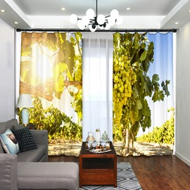 Green Grape On the Rack In Sunshine Polyester Decorative Curtain
