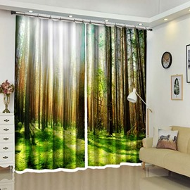 Sunlight In Lush Forest Tall Trees Window Curtains