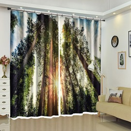 View Through Trees Near Sunset Decorative Curtain for Room