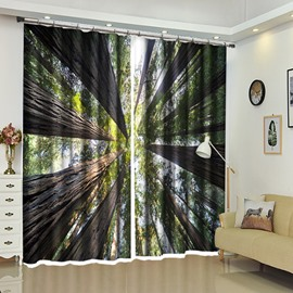 Treetop of Forest Above the head View Scenery 3D Curtain