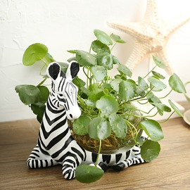 Wonderful Zebra Design Glass Flower Pot/Fish Bowl