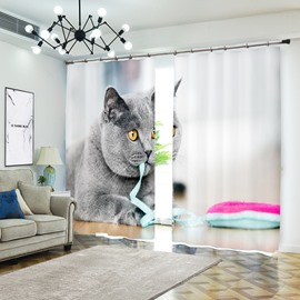 Grey Cat British Shorthair Bites Ribbon Animal Curtain
