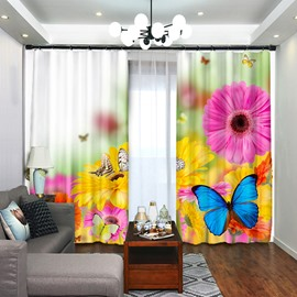 Blue Butterfly on the Gazania Flower Series Curtain Blackout