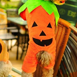 Wonderful Autumn and Winter Pumpkin Dog Clothing