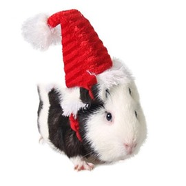Guinea Pig Christmas Costume Cute Red Fleece Hat