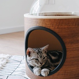 Cat Milky Way Galaxy Space Capsule Cattery