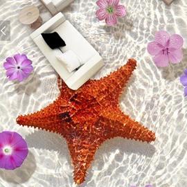 Creative Starfish 3D PVC Non-slip Waterproof Eco-friendly Self-Adhesive Floor Murals