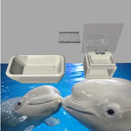 Two Lovely Cute Dolphins Playing in the Water Print Waterproof 3D Floor Murals