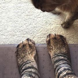 3D Cat Socks Unisex Adult and Kid Animal Paw Crew Socks